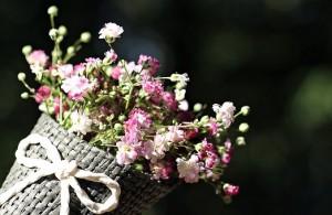 bag-gypsofilia-seeds-1716630__340